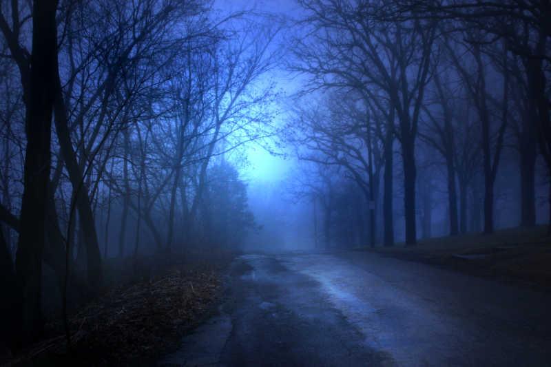 幽静的森林里的路