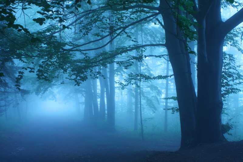迷雾森林里的路