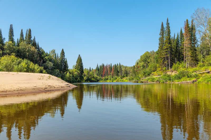 西伯利亚河边的森林