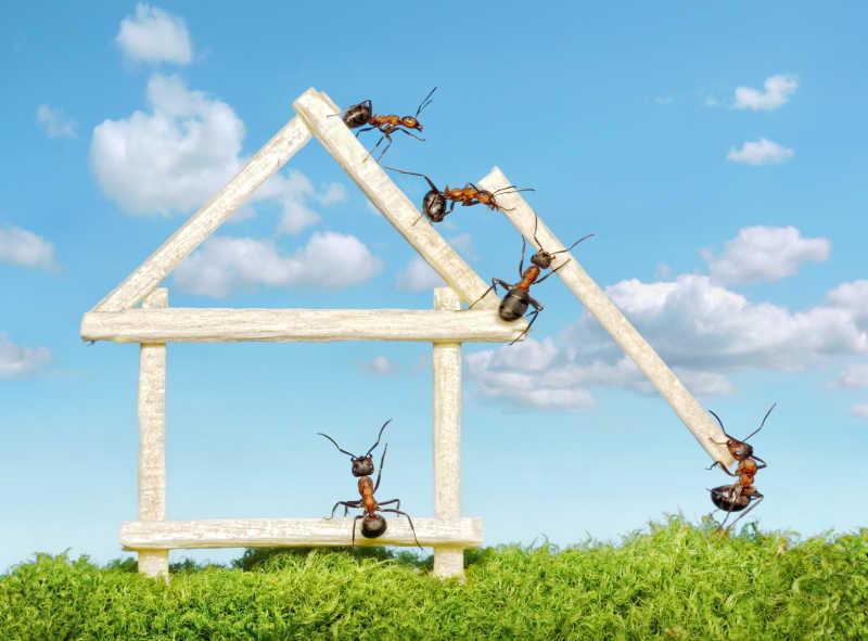 正在用火柴搭建房子的蚂蚁
