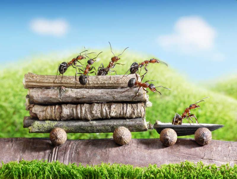 蚂蚁司机和蚂蚁乘客