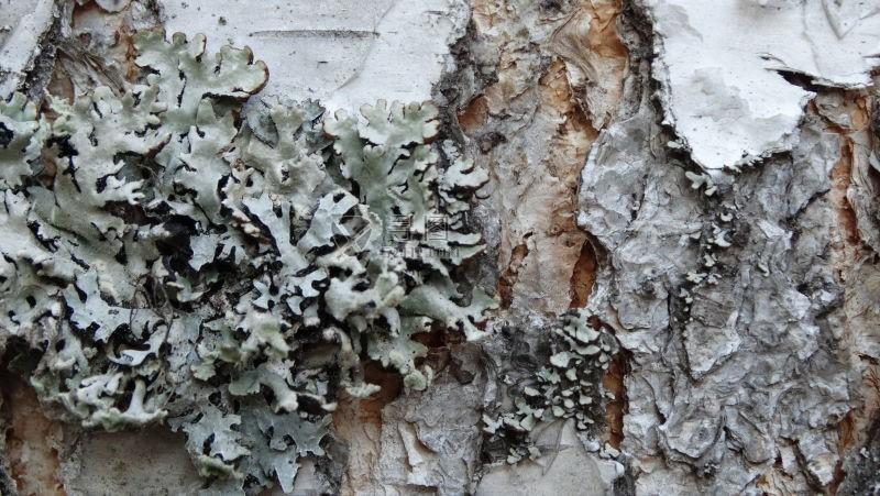 退潮以后树上爬满了灰色青苔