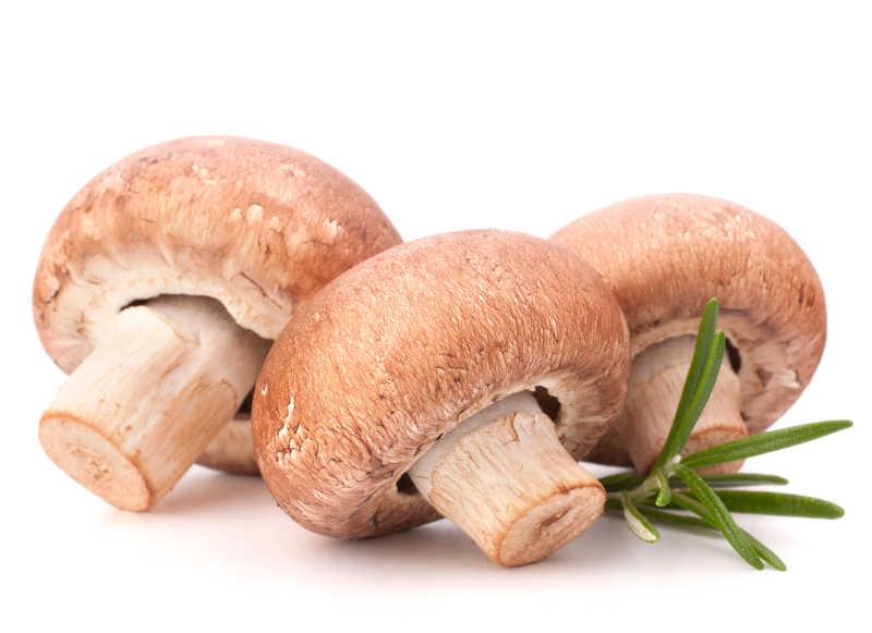 白色背景下鲜香菇特写