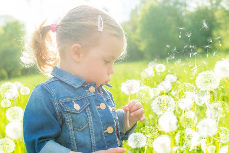 小女孩在公园吹蒲公英