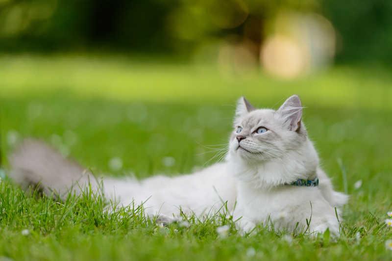 还原草地里的猫