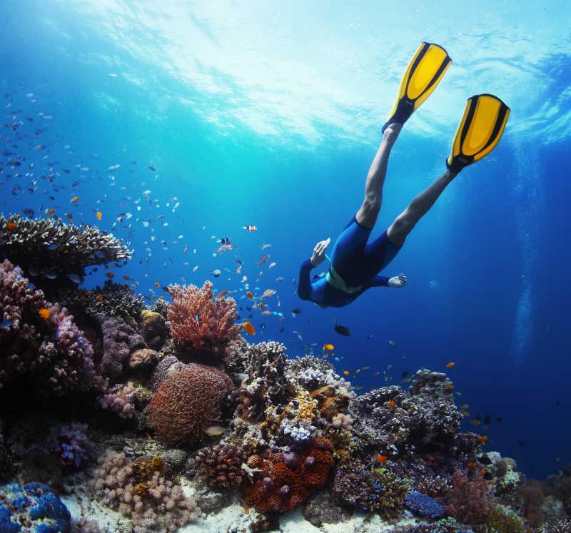 上珊瑚礁和鱼群中自由潜泳的潜水员