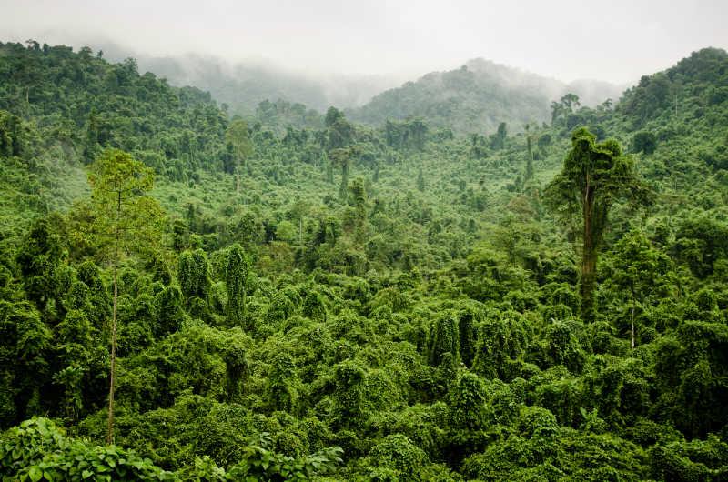越南茂盛的丛林