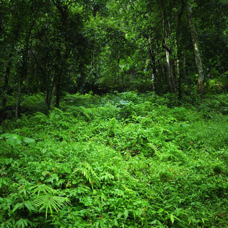 茂密的热带森林