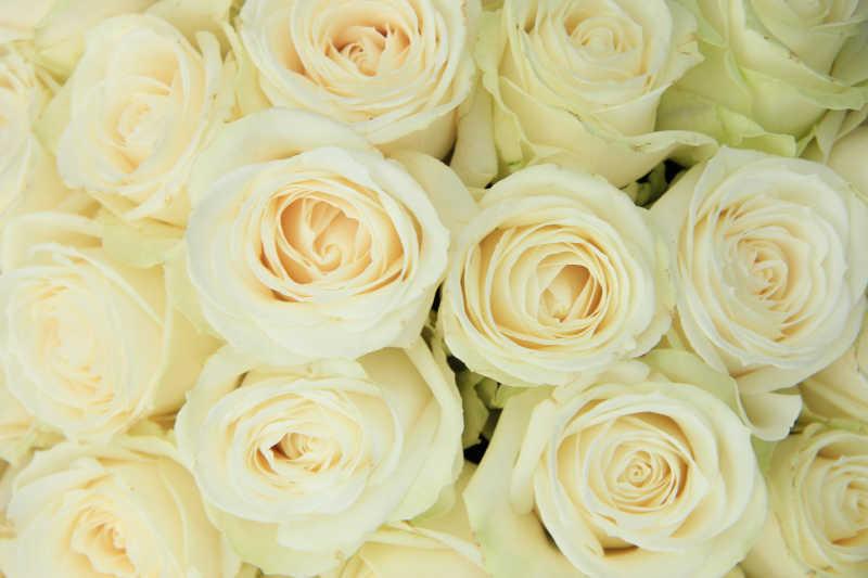 婚礼装饰白色玫瑰花