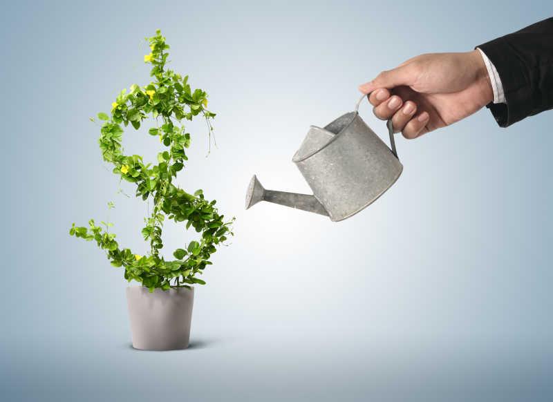 商人为美元样子的绿色植物浇水