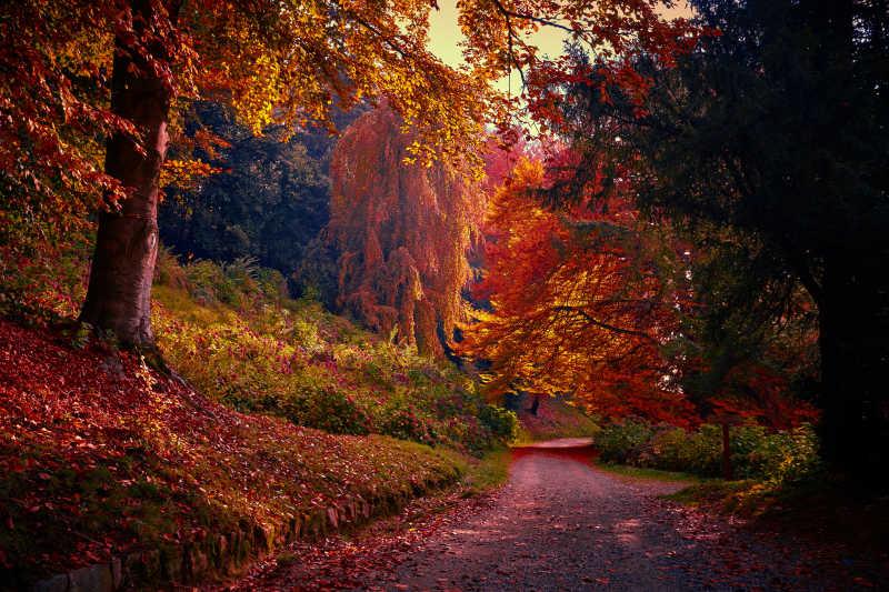秋天美丽的深林景观