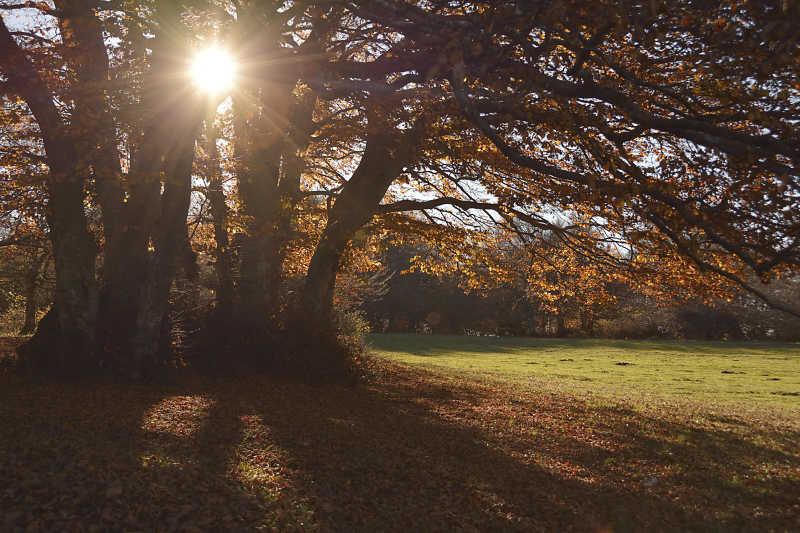 秋天的森林和阳光