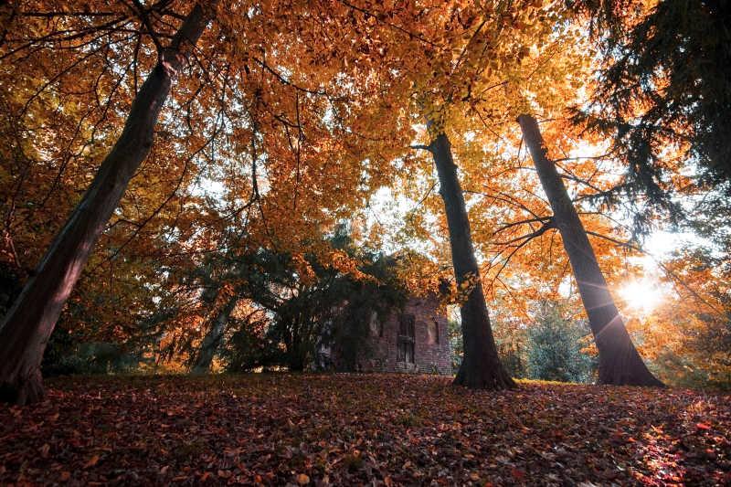 秋季森林景观与小屋背景