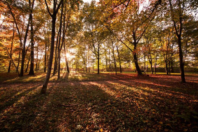 秋天的阳光照亮的森林和落叶