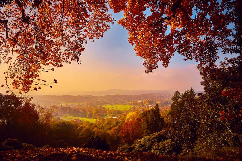 美丽的秋天森林景观