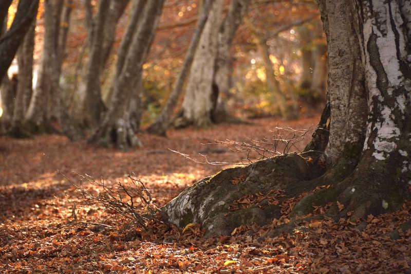 秋季森林景观