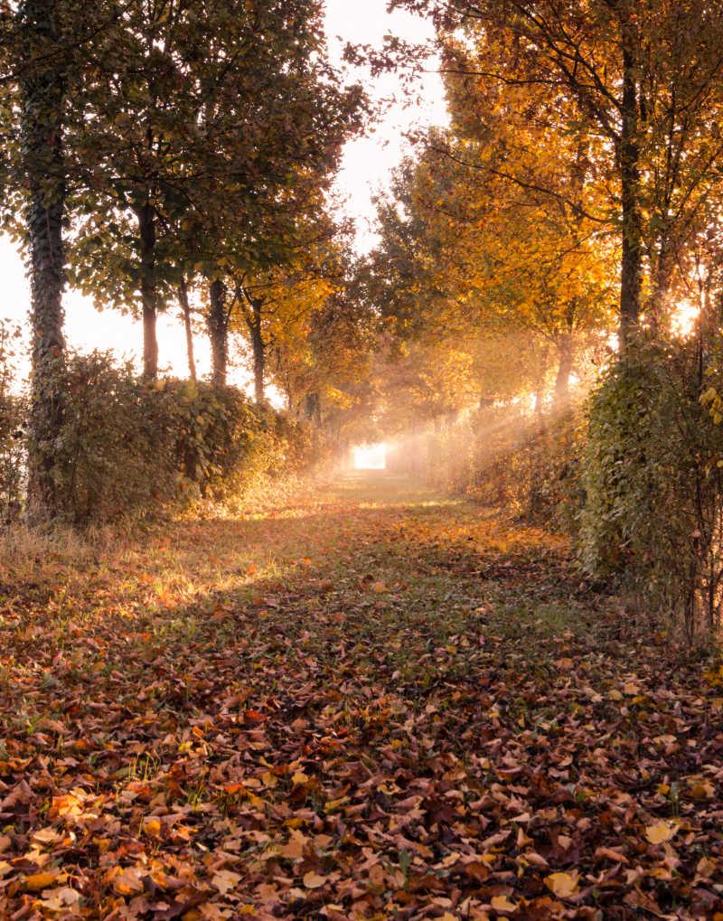 美丽的秋季森林小路和落叶