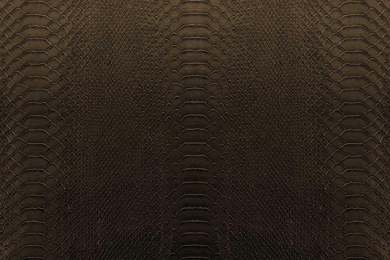 褐色背景中的爬行动物的纹理