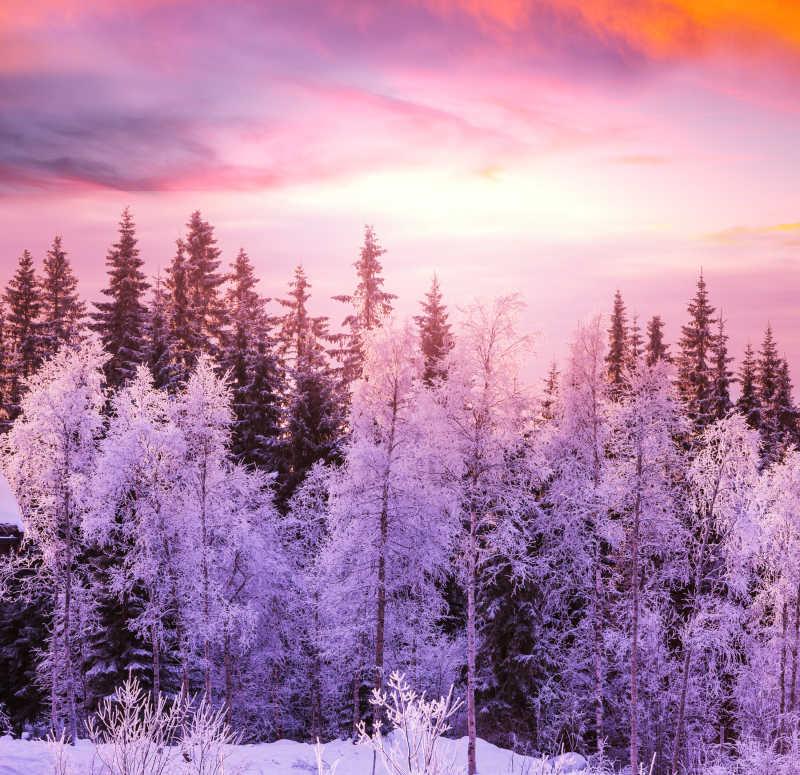 冬天的森林景色