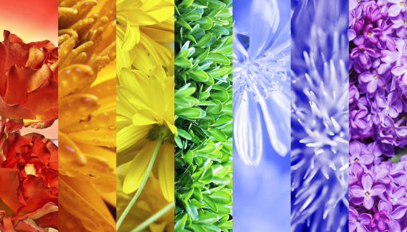 各种颜色的花拼贴