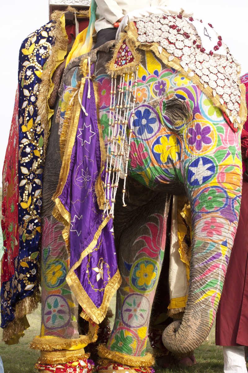 漂亮的大象