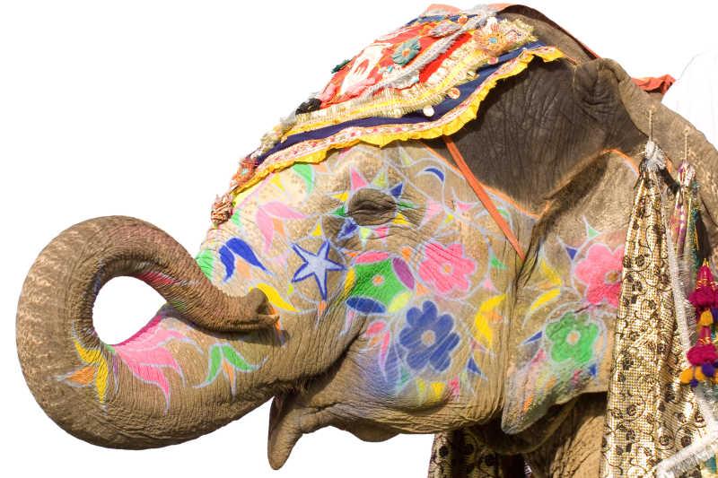 生上画着花纹的印度大象