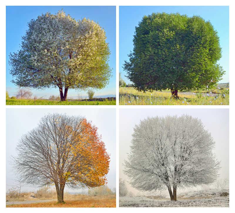 树木的四季概念