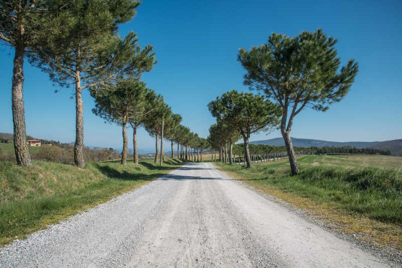 田野上的小路