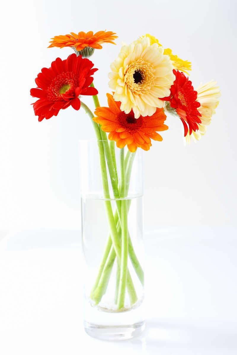 玻璃花瓶里色彩鲜艳的非洲菊