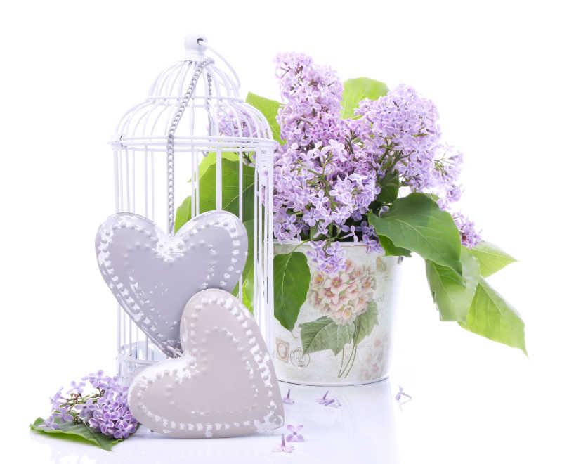 美丽的鲜花