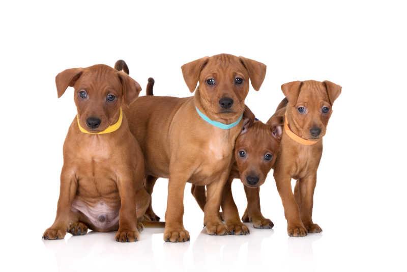 四条宠物幼犬