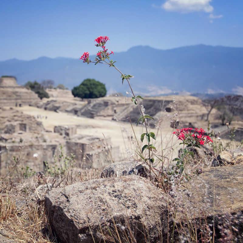 墨西哥瓦哈卡的阿尔班山遗址