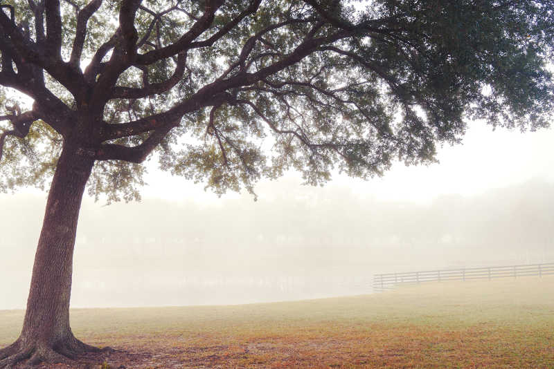 牧场上孤零的一棵树