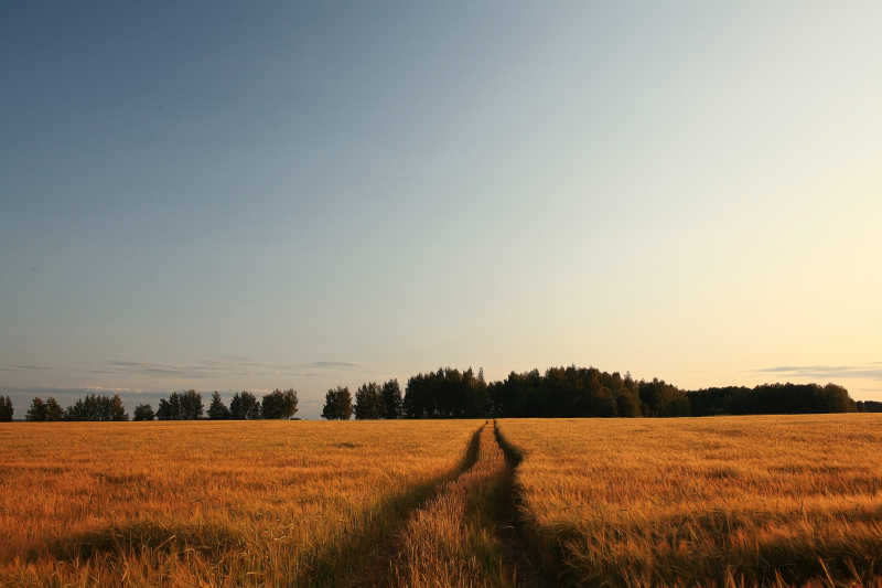 日落下牧场上的一条旧路
