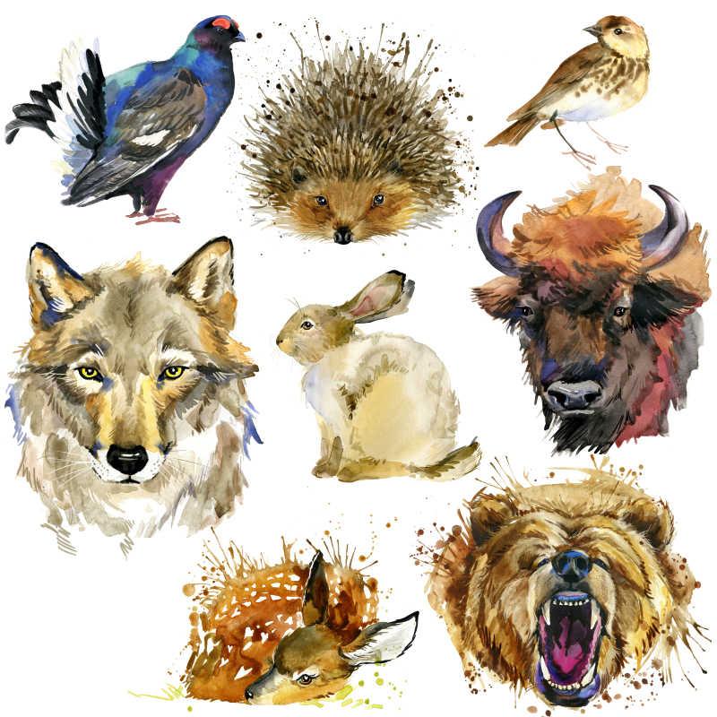 各种动物手绘油画
