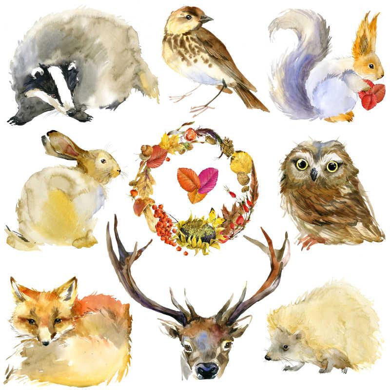 野生动物手绘