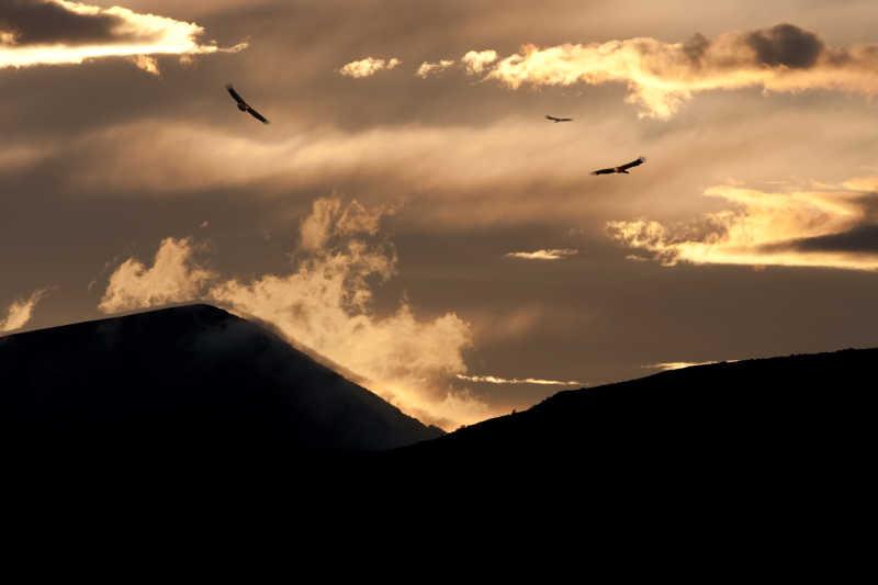鸟类盘旋在山上的天空