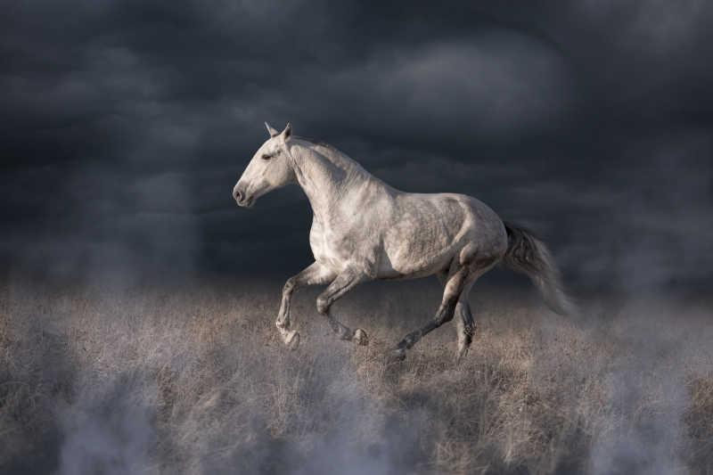在野外奔跑的灰马