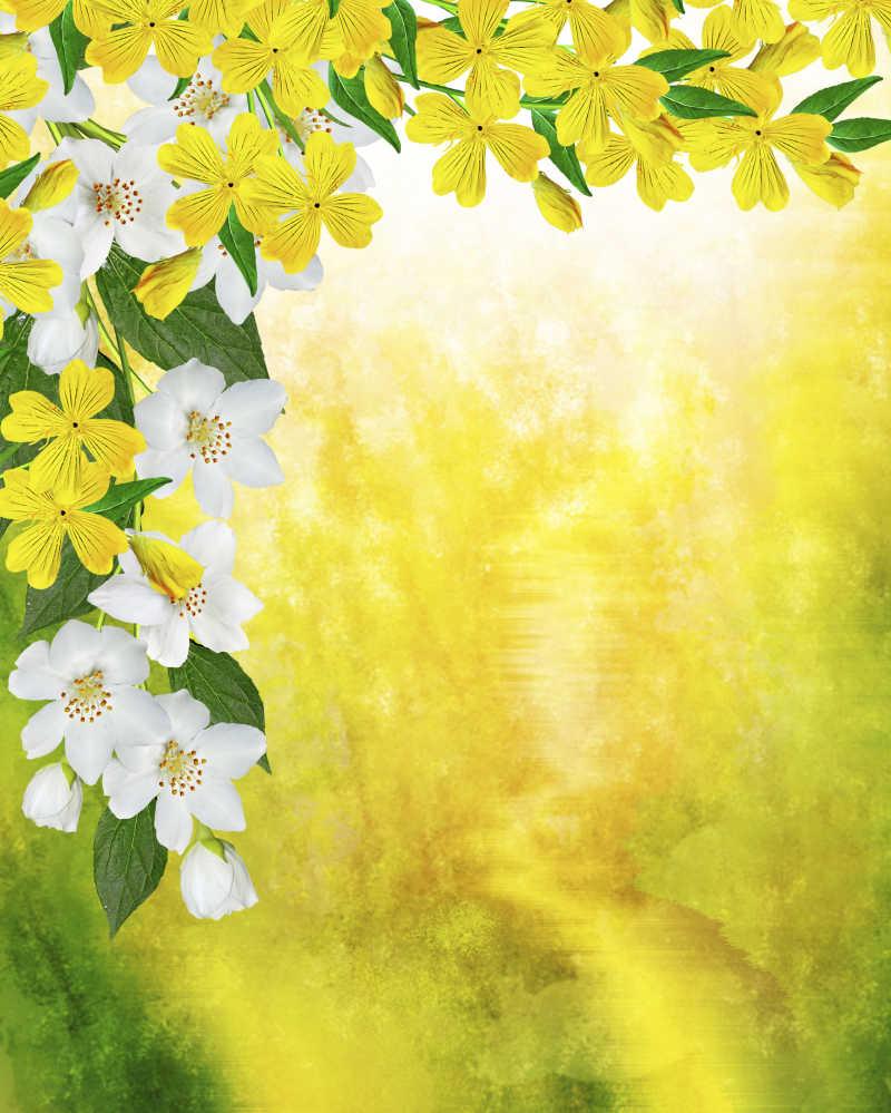 模糊黄色背景前的迎春花与茉莉花