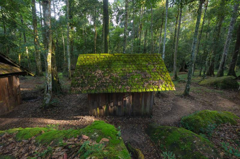 森林中的绿色小木屋