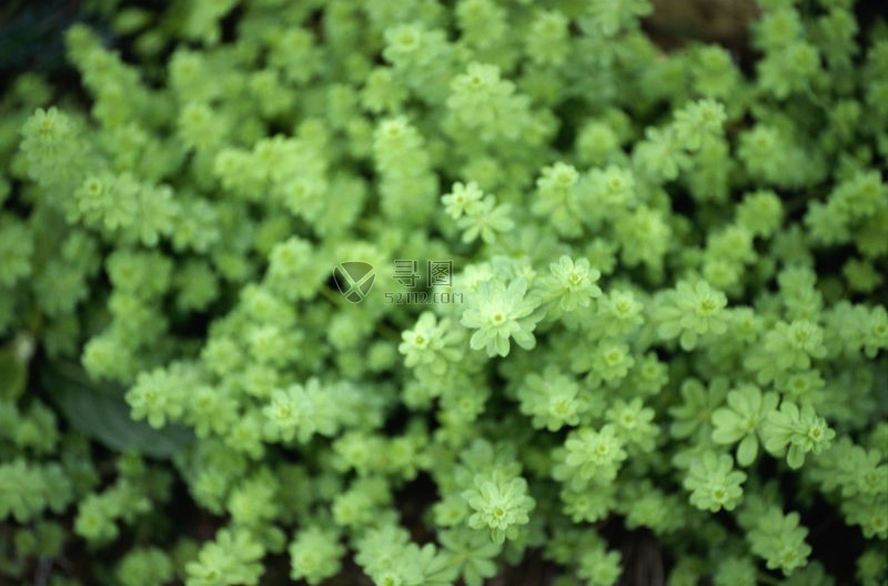 绿色的小花