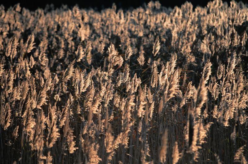 秋天枯黄的田野