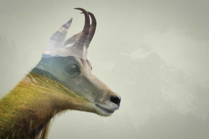 羚羊与山脉的双重曝光
