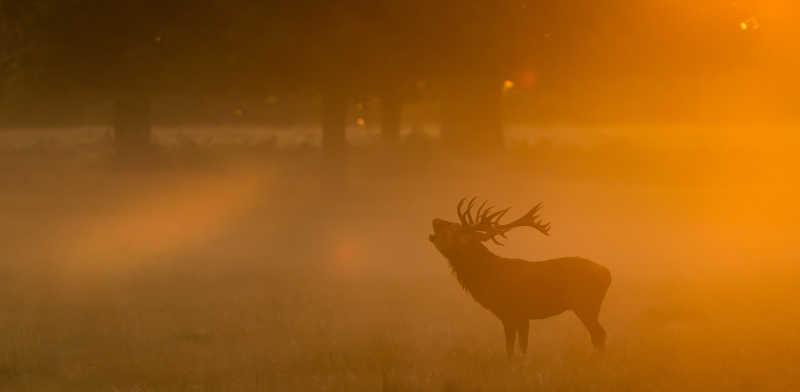 大雾里的一只鹿
