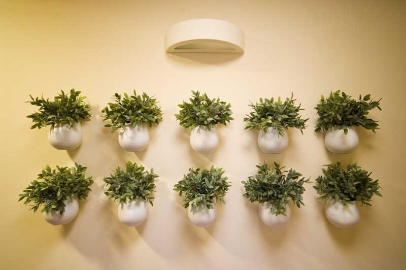 墙壁上的植物装饰