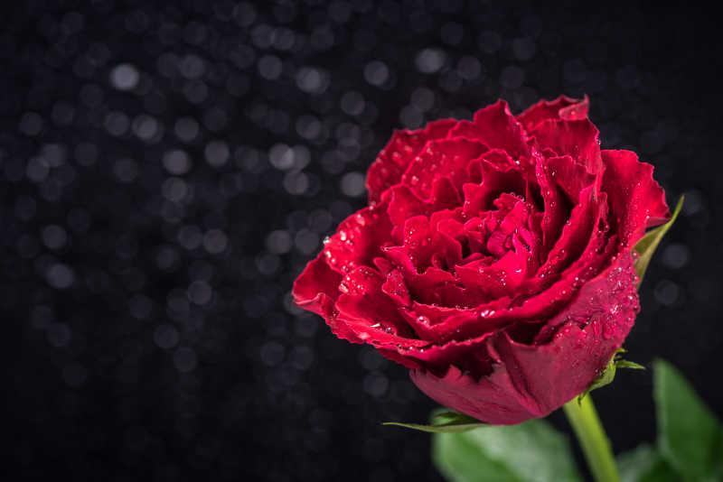 黑色背景下的鲜艳的花