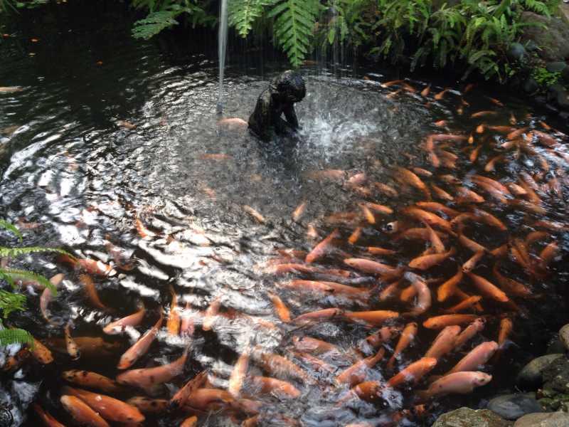 鱼塘里的鱼_夏日花园里的池塘图片-夏日花园里的小池塘素材-高清图片-摄影 ...