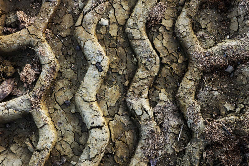 干枯的土地中留着一个痕迹很深的车轮胎印
