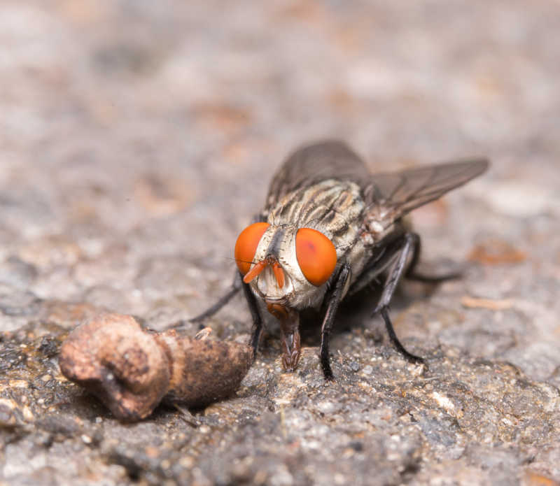 苍蝇的镜头