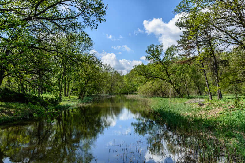 公园春天的树木和湖水